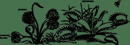 Биљке месождери
